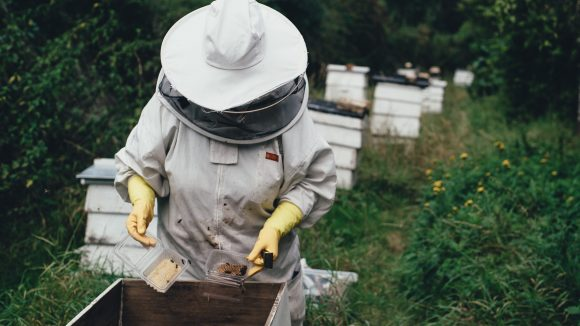 In Berlin gibt es viele Imker, die sich um die Stadtbienen kümmern. Es gibt aber auch andere Arten, den Bienen zu helfen.
