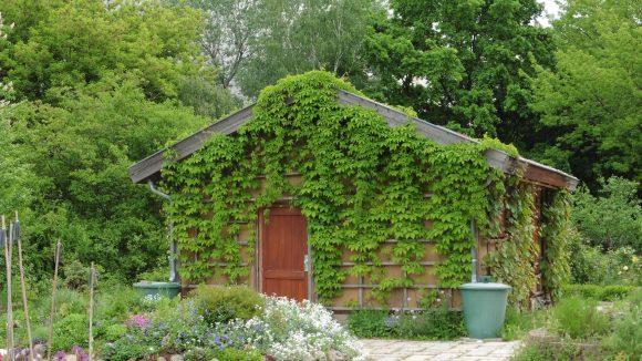 Leuchtend bunte Blumen, sattes Grün und eigene Weinpflanzen: Der Interkulturelle Garten in Lichtenberg ist eine Oase inmitten von Plattenbauten.