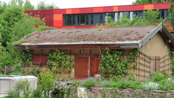 Der Interkulturelle Garten hat nicht nur Beete zu bieten - auch ein von Wein beranktes Lehmhaus befindet sich auf dem Areal. Das rote Gebäude im Hintergrund ist die benachbarte Brodowin-Grundschule.