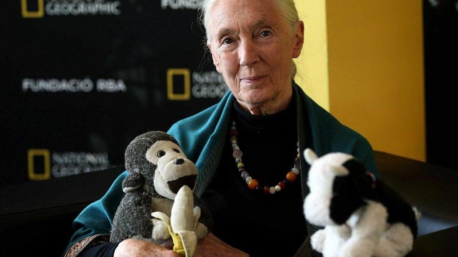 Jane Goodall setzt sich nicht nur für Affen, sondern auch für Bienen ein.