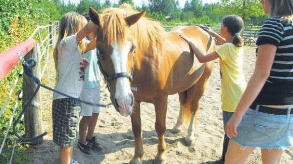 Pferde sind die Stars auf dem Moritzhof.