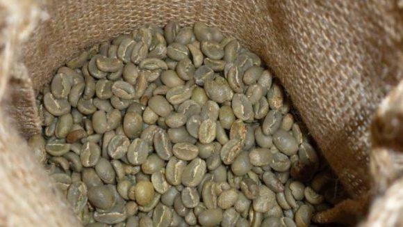 Diese grünen Kaffeebohnen sind steinhart und vollkommen ungenießbar - zumindest bis man sie röstet.