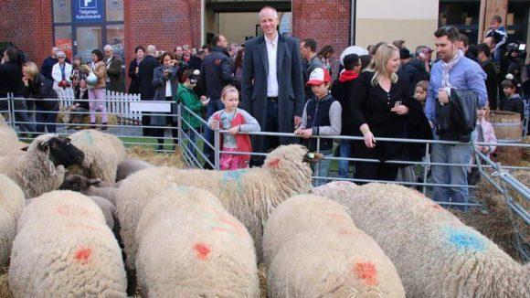 """Hier sind sie: die """"echten"""" Schafe! Mittendrin: Gastgeber Kalle Friz von Studiocanal."""
