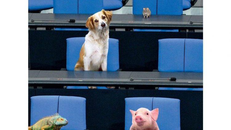Tiere in den Bundestag - in mancherlei Hinsicht vielleicht ein guter Gedanke. Ob und inwieweit die Parteien auch tierschutzpolitische Themen in ihren aktuellen Wahlprogrammen berücksichtigen, darüber informiert am 8. September ein Talk im Tierheim Berlin.