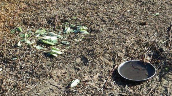 Einige Anwohner geben nicht auf und versorgen die Kaninchen weiter mit Wasser und frischem Gemüse.