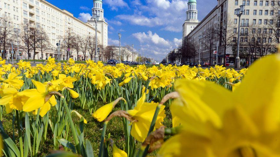 Die Karl-Marx-Allee: Frühlingshafte Idylle und im Mai auch noch Rennstrecke?