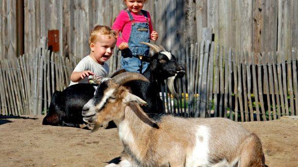 Tiere zum Anfassen: Das begeistert den Nachwuchs.