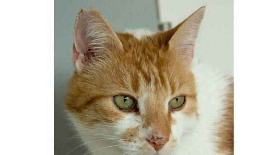 Mit seinen riesengroßen grünen Augen ist Kater Nicco wirklich ein hübsches Kerlchen!