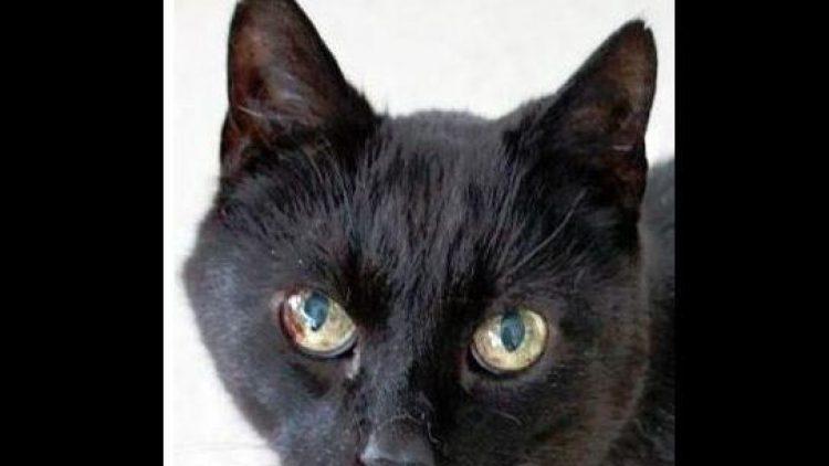 Die Augen von Katzen-Senior Vacky sind noch immer wunderschön.