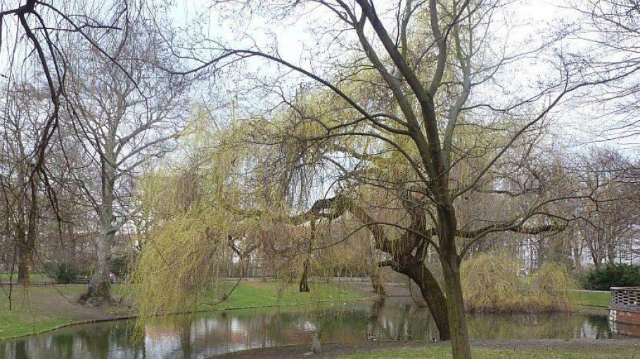 Der Stadtpark Lichtenberg, auch Parkaue, nimmt langsam mehr und mehr Farbe an ...