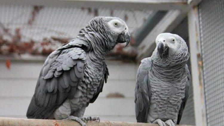 Ein geflügeltes Männerpärchen wartet im Tierheim auf ein neues Zuhause.
