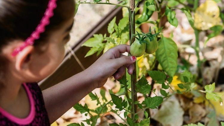 """Kinder pflegen die """"Mobilen Seelengärten""""."""