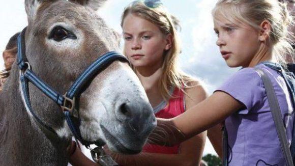 Erwartungsvoll schauen Kinder diesen Esel an: 'Bricklebrit!' Ach, wenn er doch nur Goldstücke speien könnte wie im Märchen!
