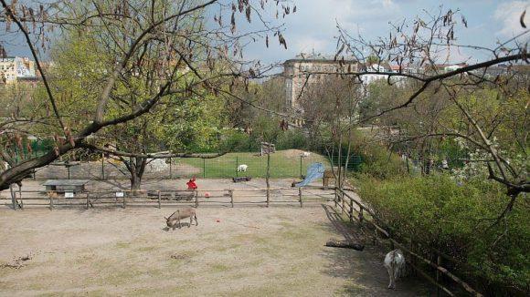 Auf dem Kinderbauernhof im Görlitzer Park gab es einen Zwischenfall bei einer Drogenrazzia der Polizei: Ein mutmaßlicher Dealer flüchtete sich auf das Gelände und rempelte ein Kind an.