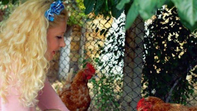 Auf Kinderbauernhöfen können sich die Besucher um Hühner und viele andere Tiere kümmern.