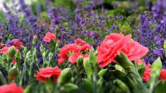 Blumenpracht gibt es natürlich auch zu bestaunen.