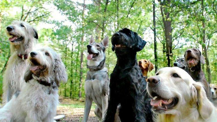 Berlins Hunde müssen sich ein neues Plätzchen für ihren Urlaub von Herrchen suchen.