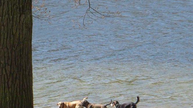 Hunde am See ... es geht auch ganz harmonisch.