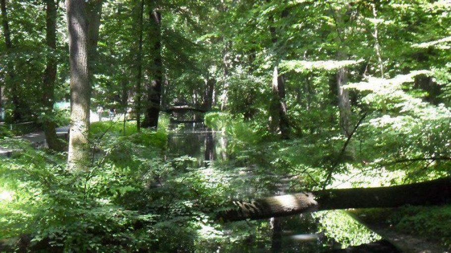 20 Prozent der Berliner Stadtfläche ist grüner – im Herbst bunter – Wald. Ideal also, um hier den Nachwuchs mit der Natur vertraut zu machen.