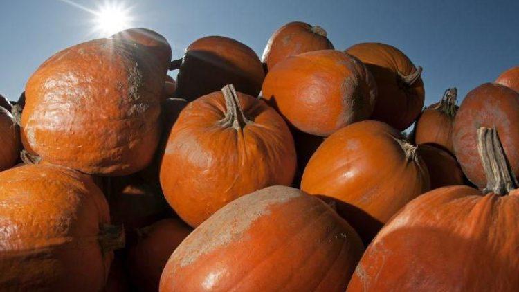 Der Herbst wird farbenfroh: mit frischem Gemüse vom Bauern oder aus eigener Ernte.