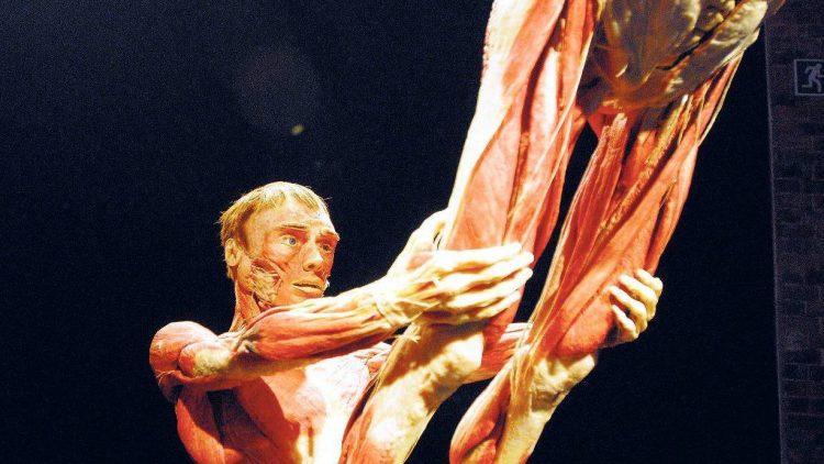 """Die Körperwelten-Ausstellungen des """"Plastinators"""" Gunther von Hagens werden immer wieder kontrovers diskutiert."""