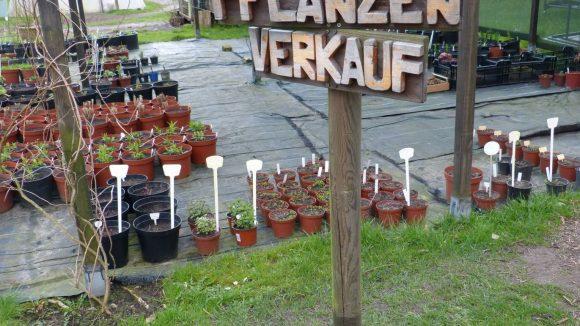 Wie der Name schon sagt werden hier unzählig viele Kräuter, alle aus biologischem Saatgut, verkauft.