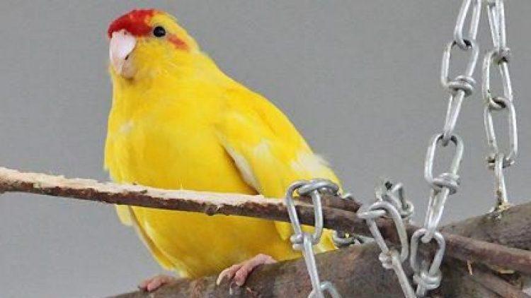 Gelb mit rotem Köpfchen: Das ist die süße Lia.
