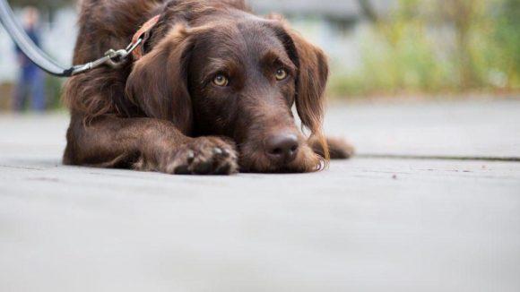Kopf hoch! Noch ist nichts sicher in der Diskussion ums neue Berliner Hundegesetz.