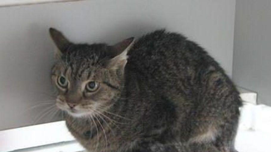 Lilly ist eine ängstliche kleine Maus und möchte bald wieder bei einem verständnisvollen Herrchen und/oder Frauchen einziehen.