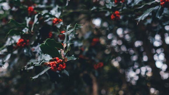 Du knutschst gerade nicht unter einem Mistelzweig? Wir verraten dir, was du sonst noch in der Adventszeit unternehmen kannst.
