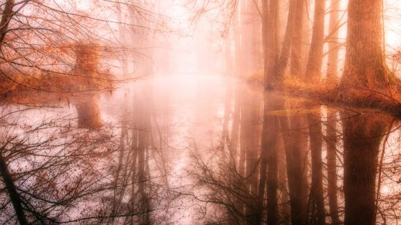 Potsdamer Sagen und Legenden laden zum Gruseln ein und kommen dir garantiert in den Sinn, wenn du durch Brandenburgs Wälder spazierst.