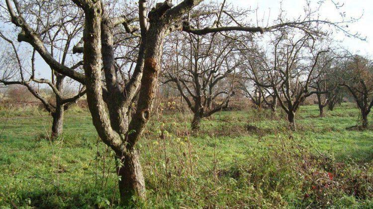 Einzigartiges Biotop: Die geschützte Streuobstwiese am Tegeler Fließ.