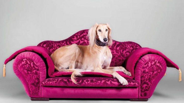"""Auf den Hundesofas von """"Narciss & Echo"""" werden Vierbeiner sehr edel gebettet."""