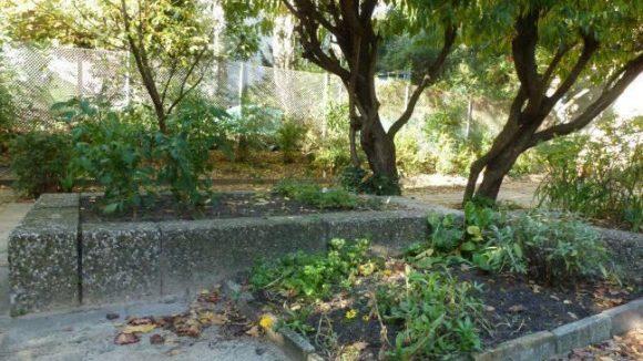 Der Naschgarten der Kita am Comenius-Garten in Neukölln braucht Pflege und Erweiterung. Dafür sind besonders im Frühjahr 2013 wieder viele fleißige, ehrenamtliche Helfer vonnöten.