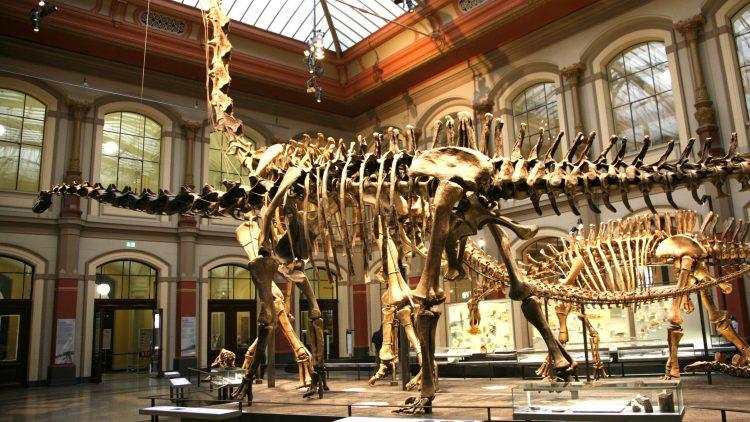 Illustre Gesellschaft: Im Naturkundemuseum kann man nicht nur staunen, sondern auch im Beisein riesiger Dinoskelette dinnieren.