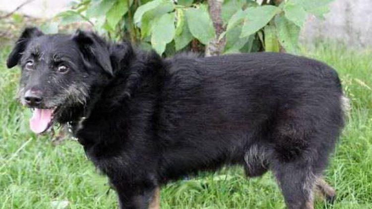 Nero ist niedlich - doch seine neuen Besitzer sollten Hundesachverstand mitbringen!