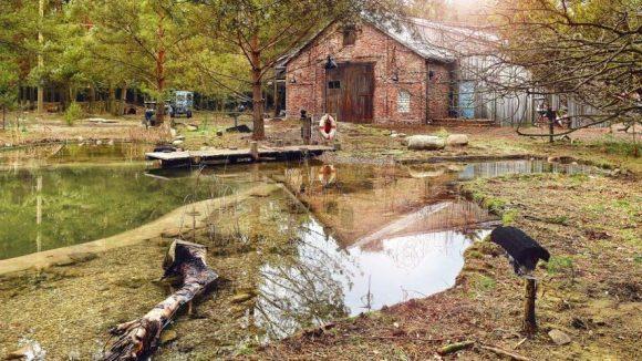 Auf diesem Grundstück im brandenburgischen Wald entsteht die Serie.