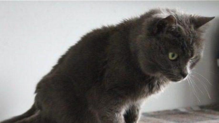 Lassen Sie sich von einer schönen Katzenseniorin verzaubern!