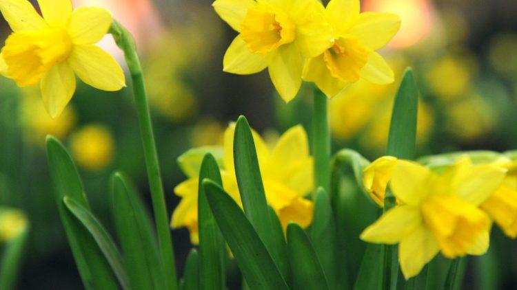 Osterglocken läuten am Ku'damm den Frühling ein.
