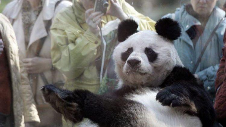 Er war einer der Lieblinge des Zoo-Publikums.