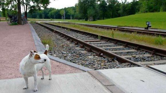 Bald können sich Zwei- und Vierbeiner auch im Westteil des Parks am Gleisdreieck austoben.