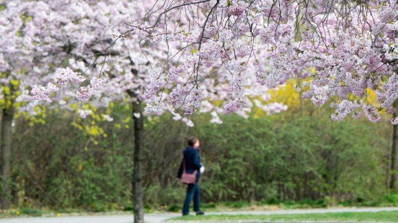 Der Haveleckpark in Haselhorst wurde neu gestaltet.