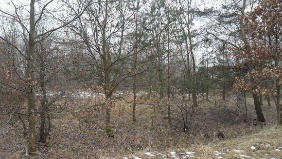 Rund 111 Hektar umfasst das ehemalige Truppenübungsgelände Parks Range, auf dem Laub- und Nadelbäume stehen.