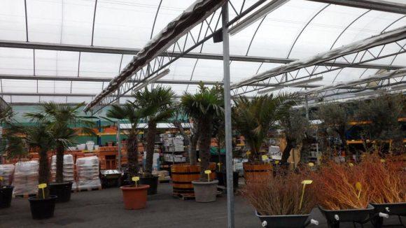 Eine echte Alternative zur Pflanzenabteilung im Baumarkt