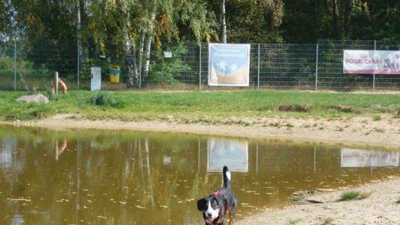 Dando am Hundestrand. Hinten am Zaun zu sehen: Die Beutelspender, die überall auf dem Gelände angebracht und auch gefüllt sind.