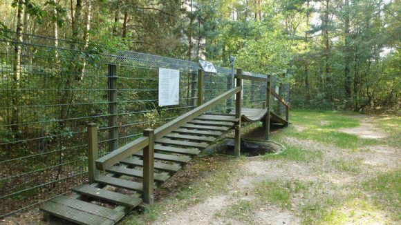 Hier gilt es, viele Hindernisse zu überwinden. Etwa die wacklige Hängebrücke ...