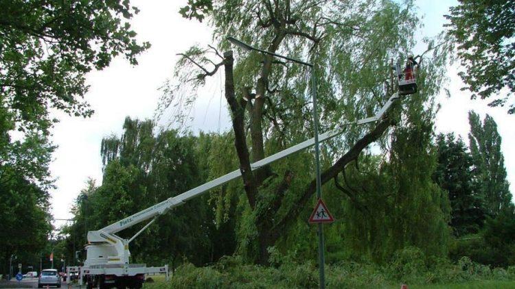 Pietz Baumdienst im Einsatz - das Unternehmen verfügt über vier eigene Hebebühnen.