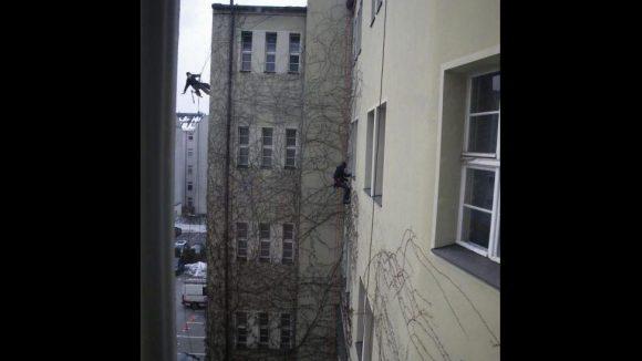 Die Kletterer von Pietz haben alle notwendigen Zertifikate. Sie werden beispielsweise zum Freischneiden von Hauswänden oder auch zur Glasreinigung eingesetzt.