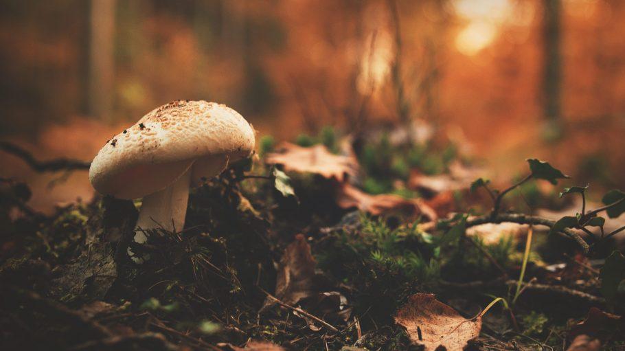 Must-Do im Herbst: Raus in den Wald und Pilze sammeln!
