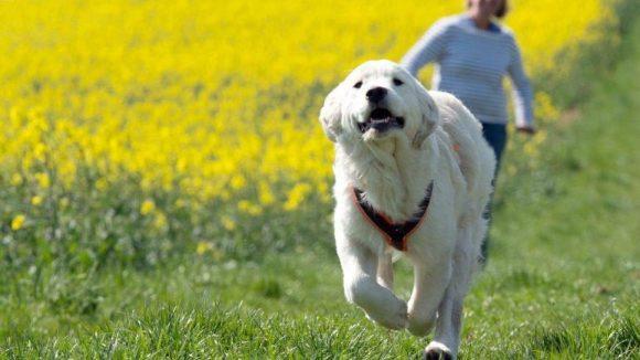 Dein Hund rennt ganz gerne mal weg? Aus Berlin kommt eine Erfindung, die dir hilft, ihn wiederzufinden.
